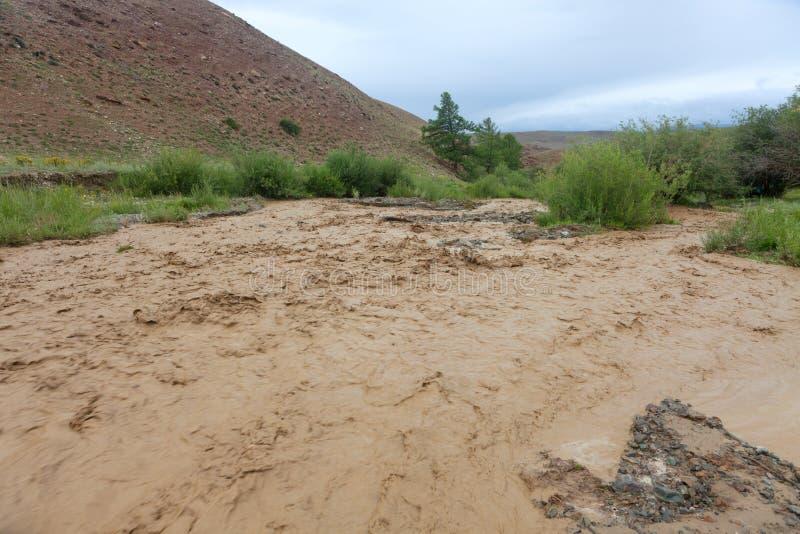 Altai mountain rapid muddy river stock image