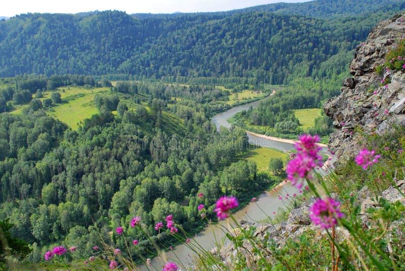 Altai natur royaltyfri fotografi