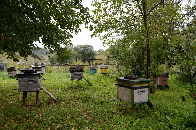 Bee hives near the house in the mountain village of Generalka of the Altai Territory stock photography