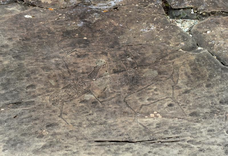 Rock petroglyphs in the tract Kalbak-Tash. ALTAI REPUBLIC, RUSSIA - JUNE 8, 2018: Rock petroglyphs in the tract Kalbak-Tash. Petroglyphs of different historical stock photos