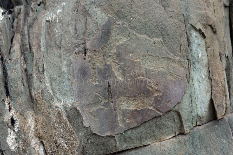 Rock petroglyphs in the tract Kalbak-Tash. ALTAI REPUBLIC, RUSSIA - JUNE 8, 2018: Rock petroglyphs in the tract Kalbak-Tash. Petroglyphs of different historical royalty free stock images