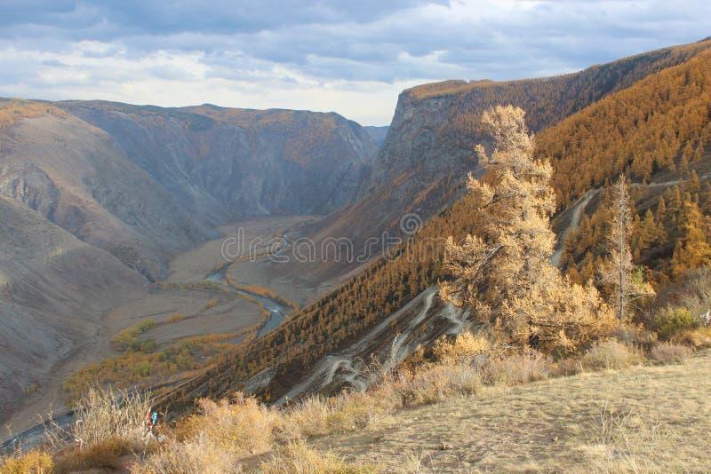 Altai republik fotografering för bildbyråer