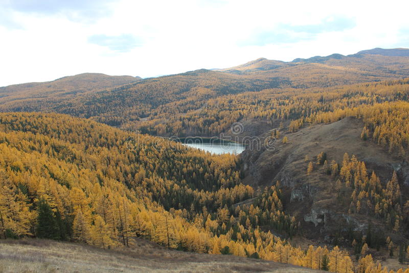 Altai republik royaltyfria foton