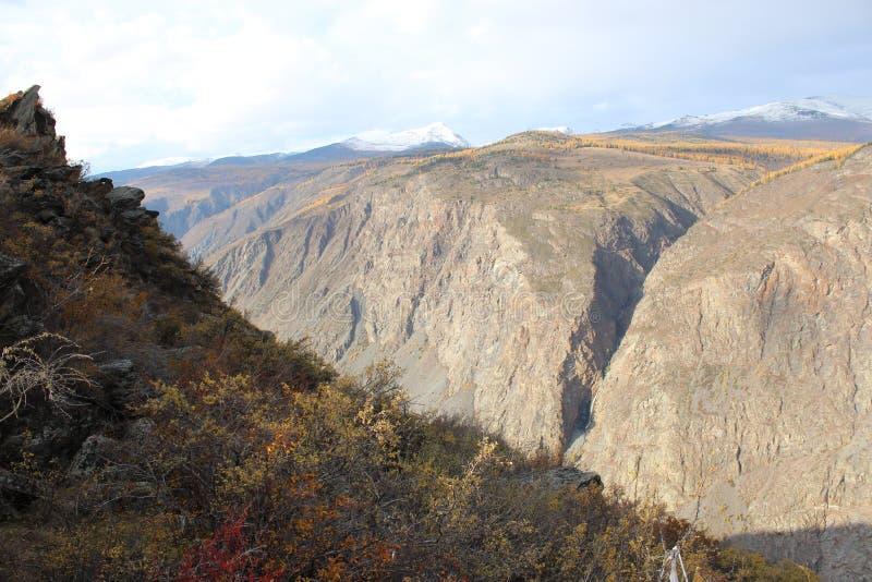 Altai republik arkivbild