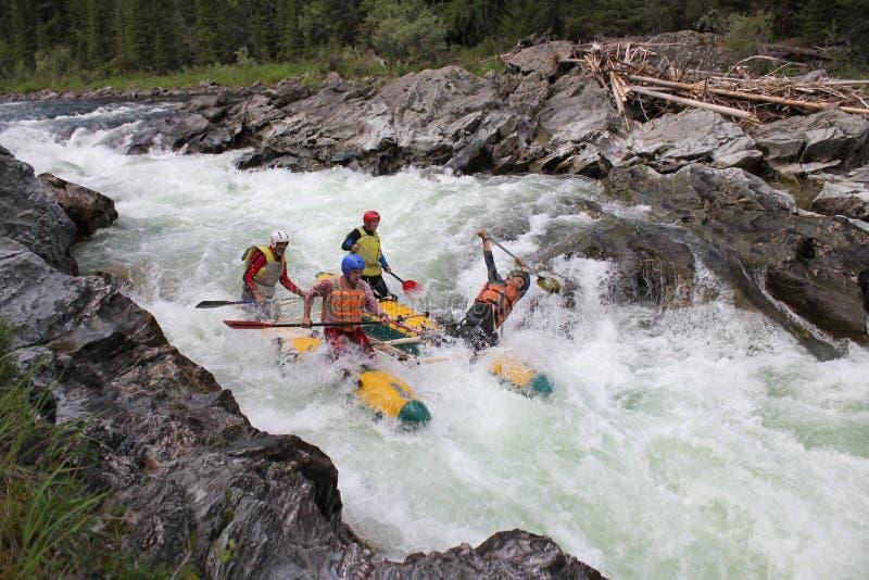 Altai republik/Ryssland - Juni 30 2016: Extrem rafting på den Bashkaus floden, extrema idrottsmän går till och med den svåra turb royaltyfri bild