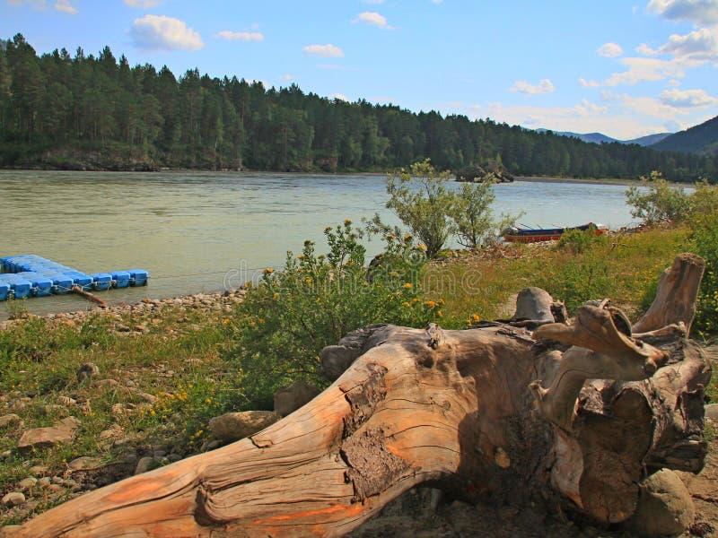 Altai, rio de Katun fotografia de stock
