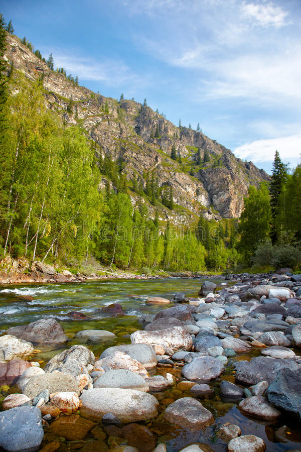 Download Altai river Kumir stock photo. Image of nature, cripple - 32067312