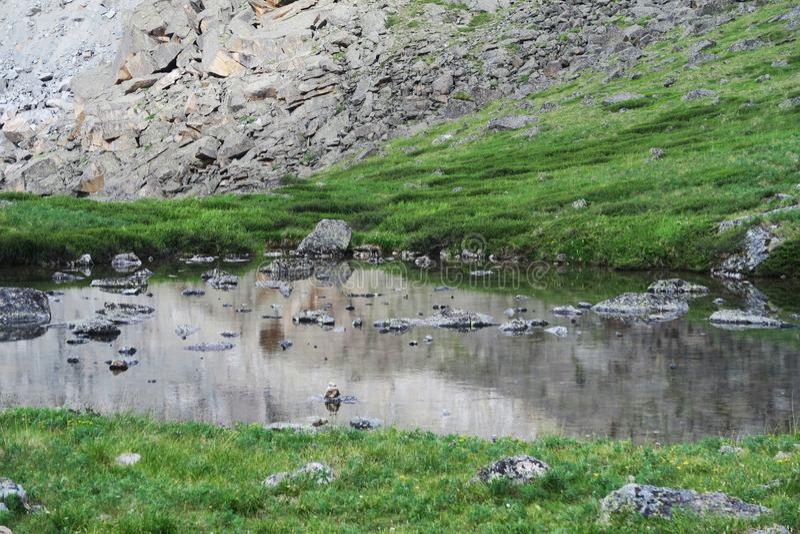 Altai See von Berggeistern Crystal Clear Lake Water stockfotos