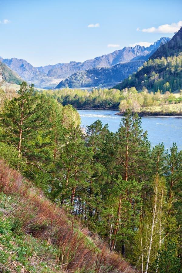 Altairivier Katun dichtbij bergdorp Chemal, Rusland royalty-vrije stock fotografie