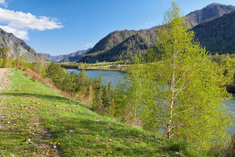 Altairivier Katun dichtbij bergdorp Chemal, Rusland royalty-vrije stock foto's
