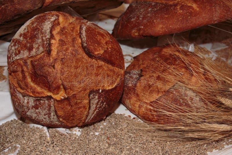 Altamura Italian Fresh Bread. And Wheat Seeds royalty free stock image
