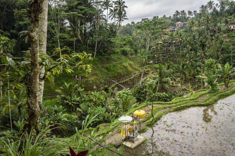 Altar do Balinese nos terraços do arroz de Tegallalang e na vegetação, Ubud, Bali, Indonésia fotos de stock