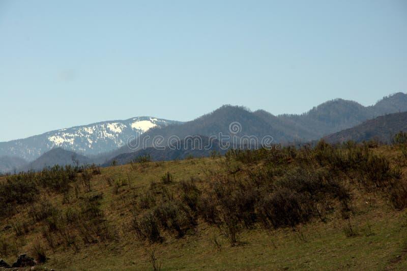 Altas cordilleras demasiado grandes para su edad con el bosque conífero debajo del cielo azul y de las nubes de cúmulo blancas foto de archivo