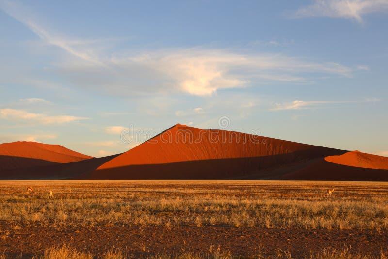 Altas dunas de arena en Namib Naukluft NP fotos de archivo