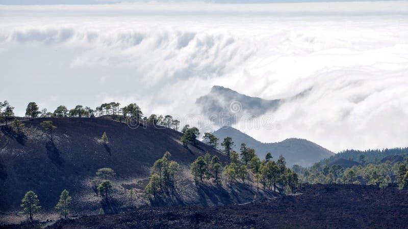 Altas nubes sobre bosque de los árboles del cono del pino en la isla de Tenerife imagen de archivo
