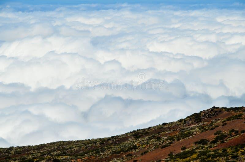 Altas nubes sobre bosque de los árboles del cono del pino imagenes de archivo