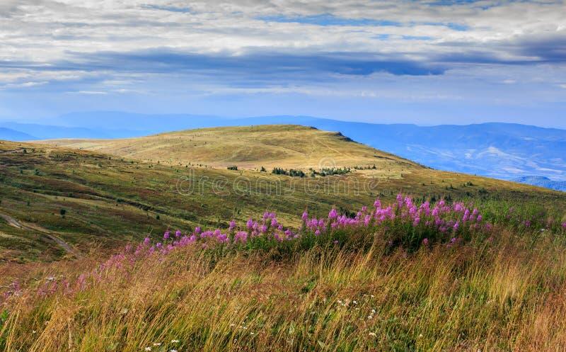 Altas plantas silvestres en el top de la montaña imagen de archivo