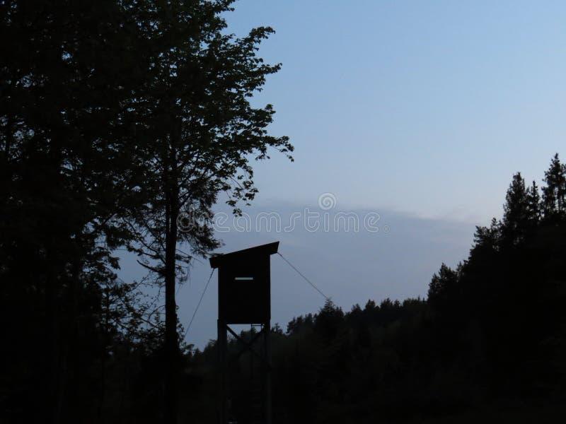 Altas siluetas de Seat y de los árboles en Forrest durante puesta del sol imagen de archivo libre de regalías