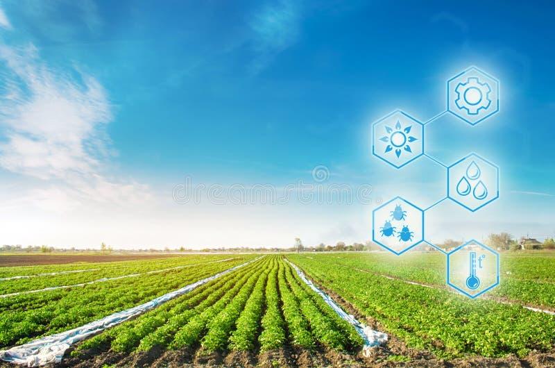 Altas tecnolog?as e innovaciones en agroindustria Calidad del estudio del suelo y de la cosecha Trabajo y desarrollo científicos  imagen de archivo