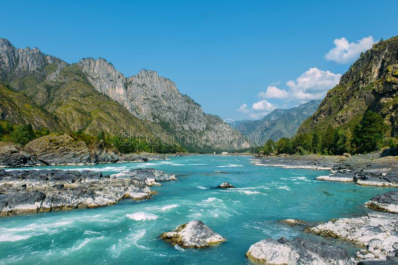 The Altay landscape with bright turquoise mountain river Katun and green rocks, Siberia, Altai Republic royalty free stock photography