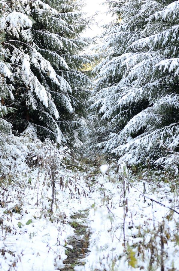 Altay skog royaltyfria bilder