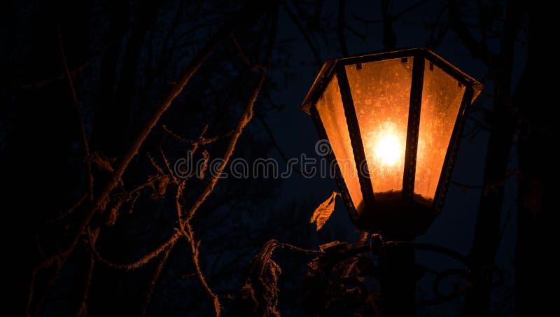 altay zdrowia belokurikha nocy kurort światło zastrzelił Siberia ulicę zdjęcie royalty free