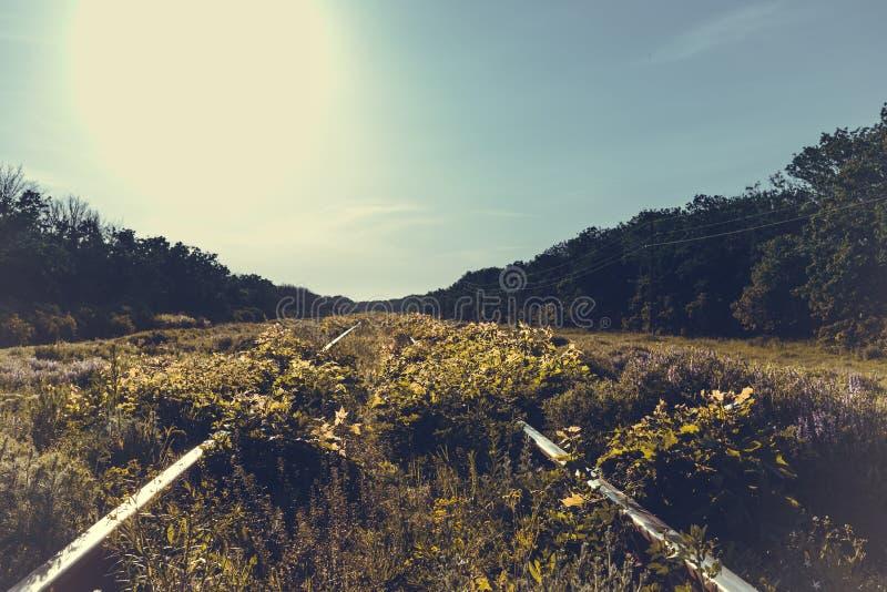 Alte überwucherte Zeit der Eisenbahnlinien im Frühjahr stockbilder