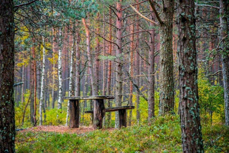 Alte Bänke im Wald lizenzfreie stockfotografie
