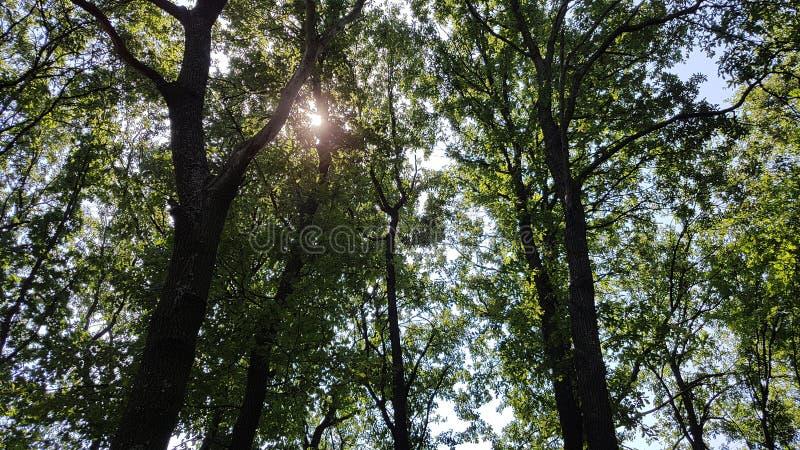 alte Bäume Bulgarien stockbilder