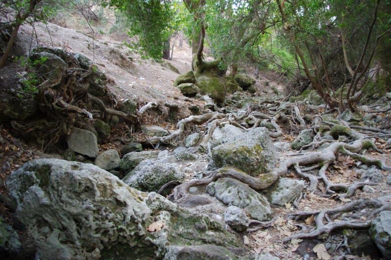 Alte Bäume und Steine stockfoto