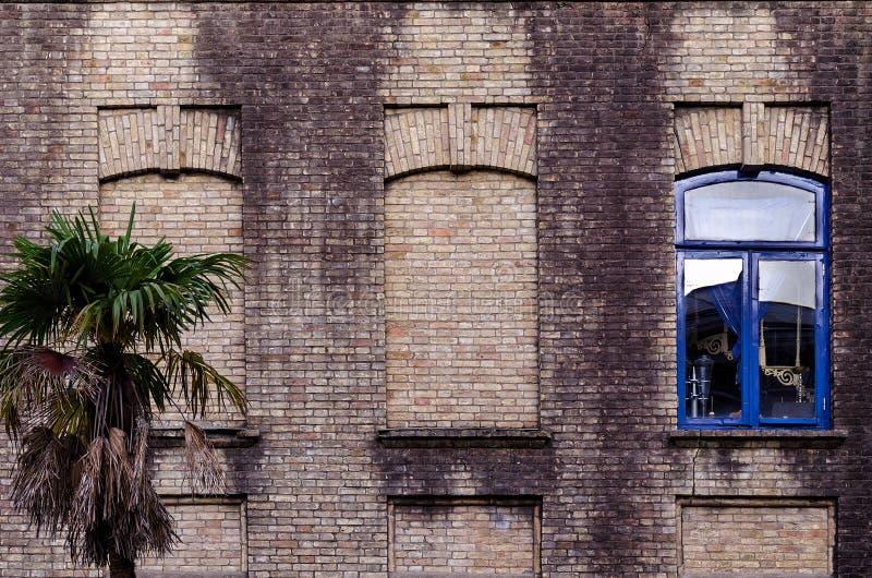 Alte Backsteinmauer mit drei Fenstern, zwei falsch, eins mit Glas- und blauem Farbrahmen, kleine Palme nahe Gebäude lizenzfreies stockfoto