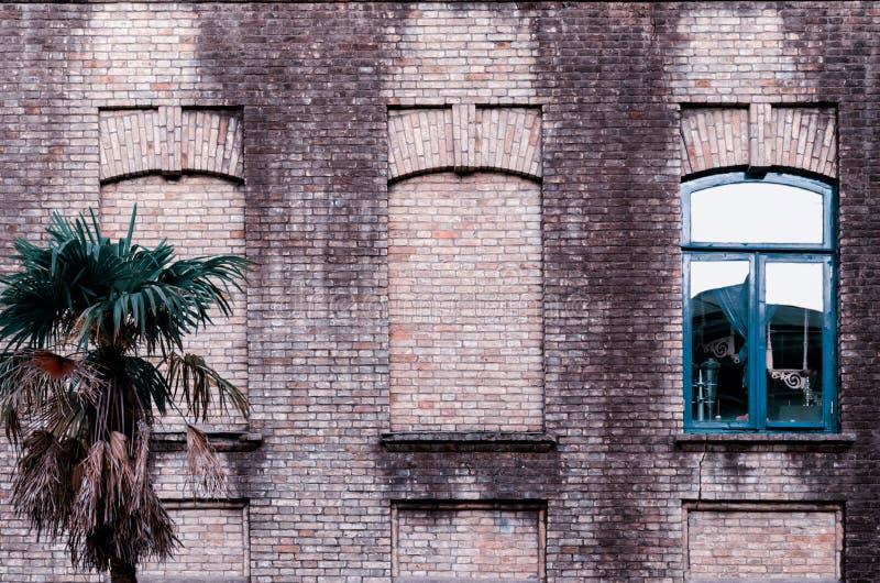 Alte Backsteinmauer mit drei Fenstern, zwei falsch, eins mit Glas- und blauem Farbrahmen, kleine Palme nahe Gebäude stockfoto
