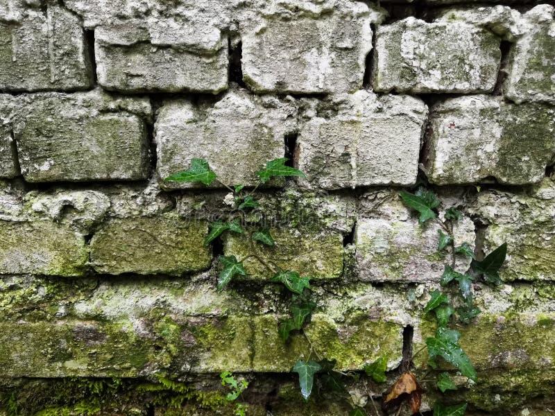 Alte Backsteinmauer mit gesch?digter wei?er Farbenschicht, Nahaufnahmehintergrund-Fotobeschaffenheit lizenzfreie stockfotografie