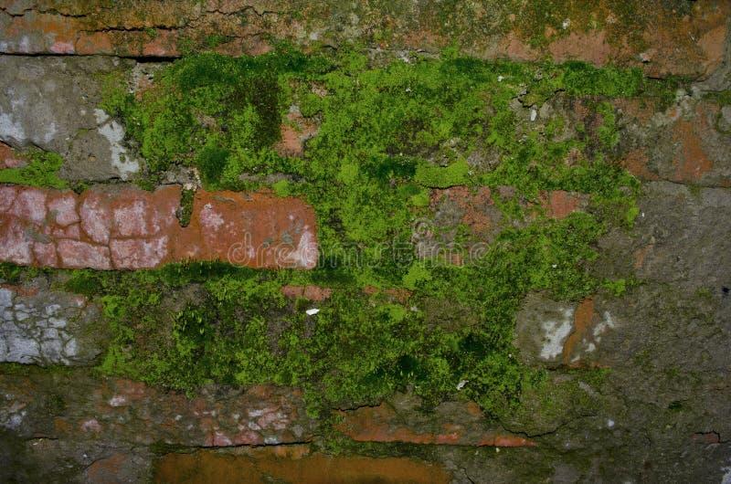Alte Backsteinmauer mit Moos lizenzfreies stockbild
