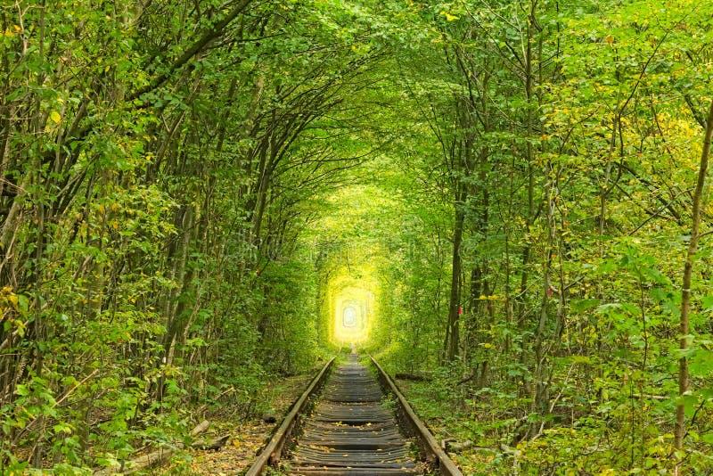 Alte Bahnlinie Natur mithilfe der Bäume hat einen einzigartigen Tunnel hergestellt Tunnel der Liebe - wunderbarer Ort von Natur a stockfoto