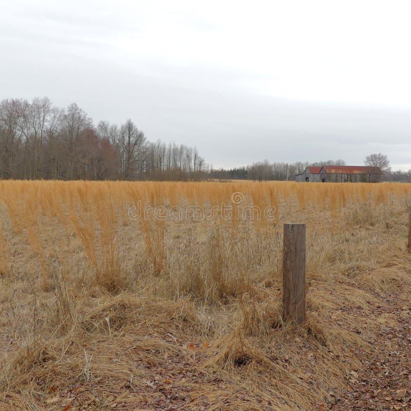 Alte Bauernhof-Strukturen auf Feld des Kornes stockfoto