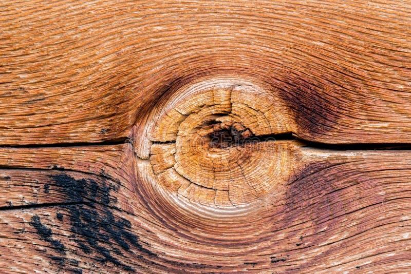 Alte Baumbeschaffenheit mit einem Weibchen stockfoto