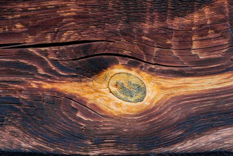 Alte Baumbeschaffenheit mit einem Weibchen stockbilder