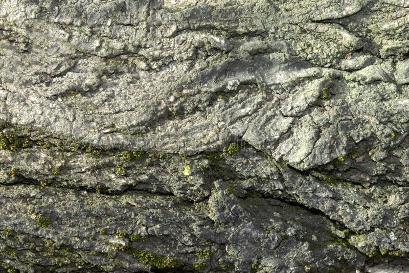 Alte Baumrinde, Ulme Hintergrund lizenzfreies stockbild
