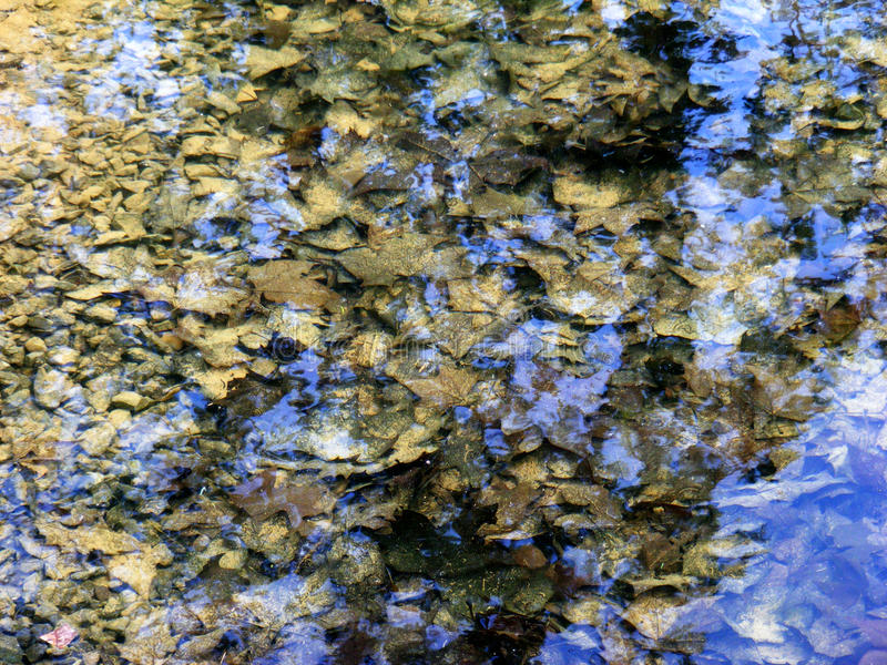 Alte Blätter im Wasserrieseln stockfotos