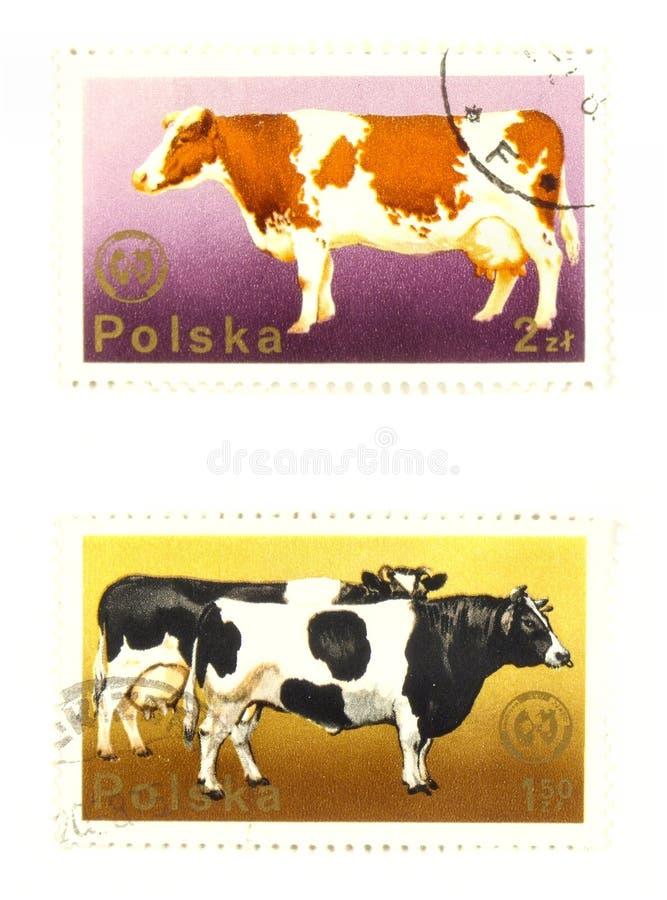 Alte Briefmarken von Polen lizenzfreies stockfoto