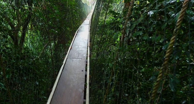 Alte corde sopra la foresta pluviale immagine stock libera da diritti