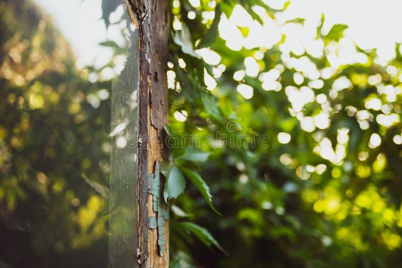 Alte defekte Tür mit Reflexion im Fenster, welches die grapewine Blätter anzeigt, die auf dem antiken Haus wachsen nostalgiker stockbild
