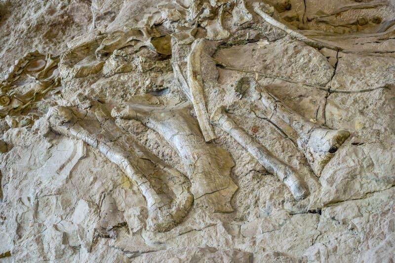 Alte Dinosaurierknochen eingebettet in der felsigen Talwand stockbilder