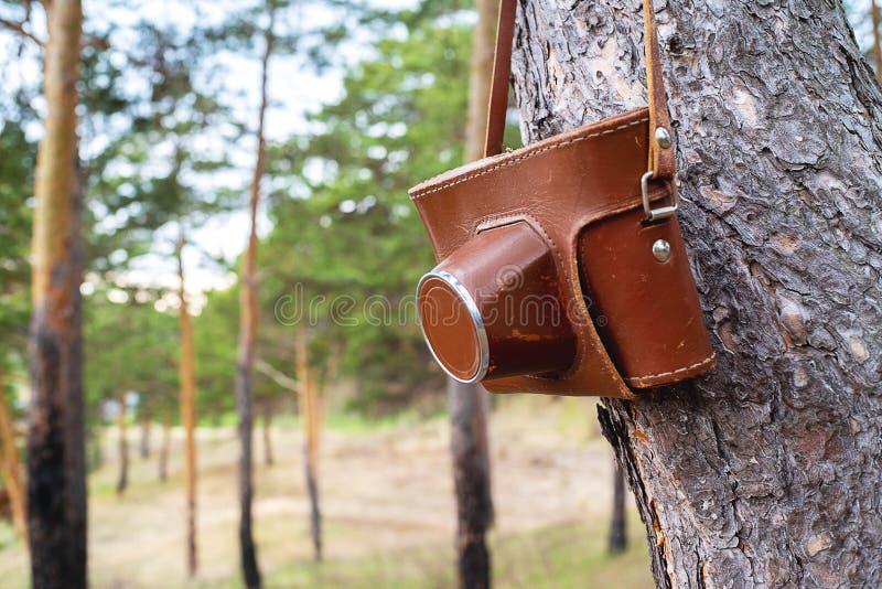Alte Filmkamera in einem braunen ledernen Kasten, der an einem Baumbügel hängt lizenzfreie stockbilder