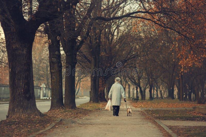 Alte Frau, die mit ihrem Hund auf Straßen einer Stadt geht lizenzfreie stockfotografie