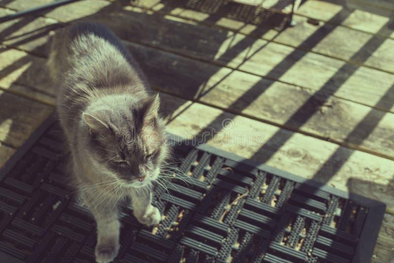 Alte graue Katze, die in der Sonne auf Portal badet lizenzfreie stockfotografie