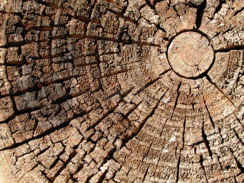Alte hölzerne Baum-Ring-Beschaffenheit lizenzfreie stockbilder