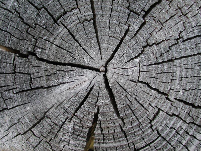 Alte Hölzerne Baum-Ring-Beschaffenheit Stockfotos