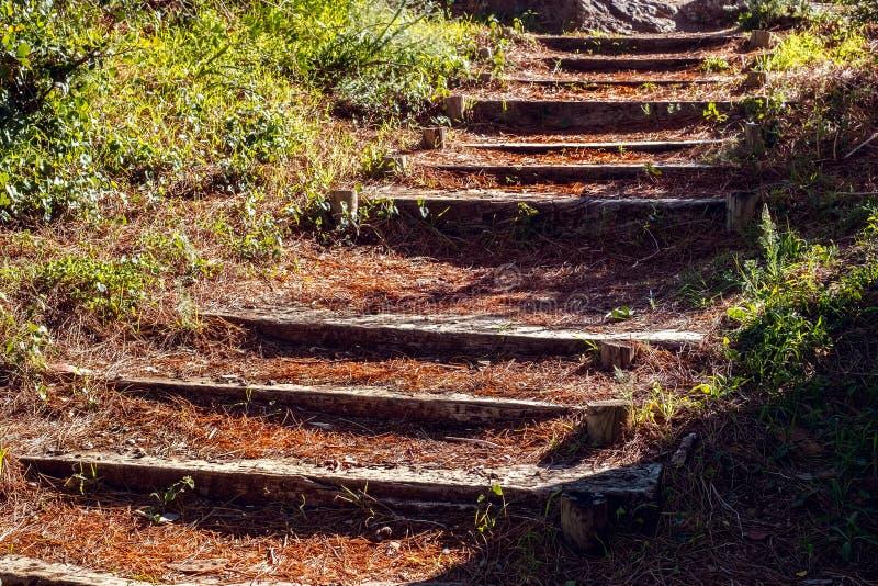 Alte hölzerne Treppe durch den Wald stockfotos